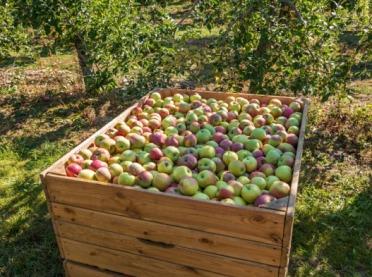 Tajlandia nowym kierunkiem dla polskich jabłek