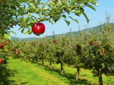 Nowy środek od Corteva Agriscience do ochrony sadów