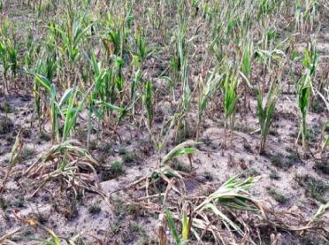 WAŻNE! Wnioski suszowe od 3 października