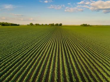 Corteva Agriscience i Pro Farm Technologies będą działać wspólnie