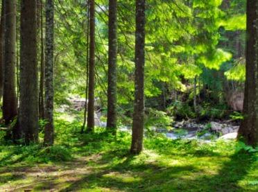 Wsparcie na inwestycje zwiększające odporność ekosystemów leśnych - nabór wniosków