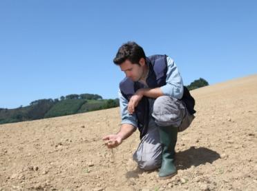 Czy rolnicy zdążą z wnioskami o pomoc suszową?