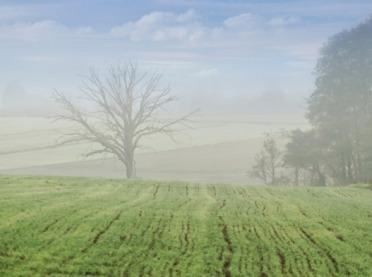 Co wpływa na przezimowanie zbóż?