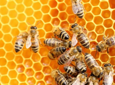 PE zablokował nieskuteczny projekt przepisów ochrony pszczół przed pestycydami