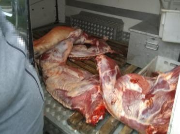 Przewóz mięsa z poważnymi zastrzeżeniami