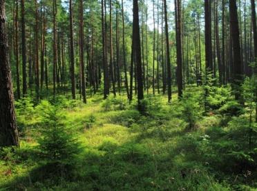 Wsparcie na inwestycje zwiększające odporność ekosystemów leśnych – nabór wniosków dobiega końca