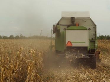 Kukurydza: zbiory dobiegają końca