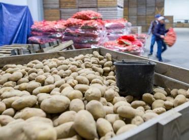 Bronisze: rozszerza się asortyment warzyw importowanych