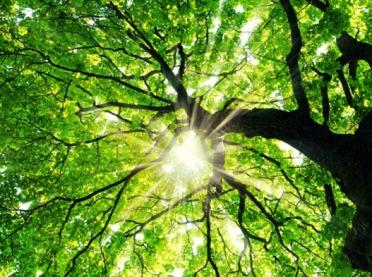 Konkurs na Drzewo Roku 2020 - zgłoś drzewo z historią