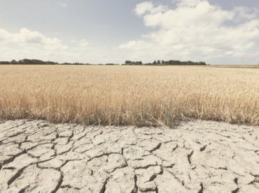 Uwaga rolnicy! Termin składania wniosków o pomoc suszową przedłużony