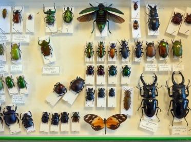 Nieudany przemyt... owadów zagrożonych wyginięciem
