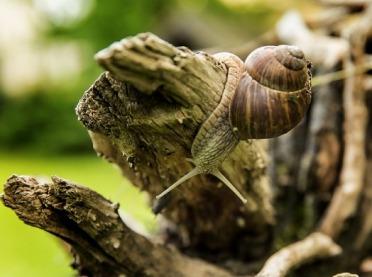 Ekogwarancja w restauracji, czyli ślimaki bez GMO