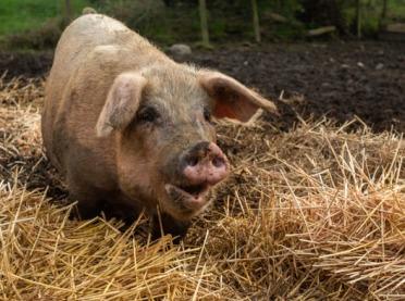 Jak wyglądała droga do dobrostanu zwierząt?
