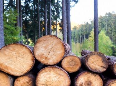 Nowe zasady sprzedaży drewna w Lasach Państwowych