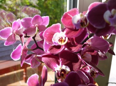 Jakie kwiaty doniczkowe wybrać do mieszkania?