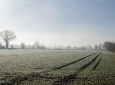 Jaką pogodę przyniesie grudzień? Czy czeka nas mroźna zima?