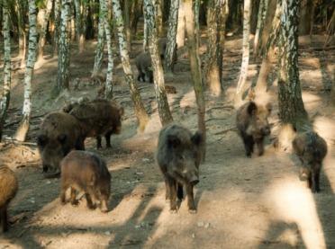 Rolnicy z Dolnego Śląska chcą budowy płotu