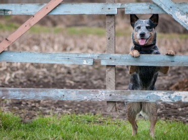 Kto pokrywa szkody wyrządzone przez psa rolnika?