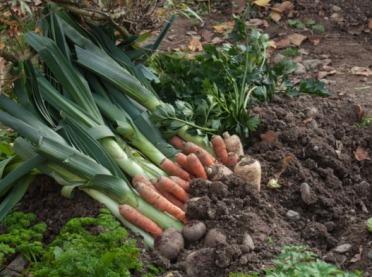 Podsumowanie tegorocznego sezonu uprawy warzyw