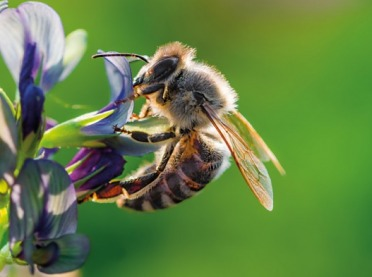 Mniej pestycydów = więcej pszczół?