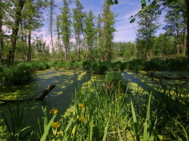 """Upływa termin składania wniosków na """"Inwestycje w gospodarstwach położonych na obszarach Natura 2000"""""""
