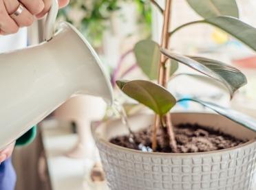 Jak zadbać o rośliny doniczkowe w domu podczas zimy?