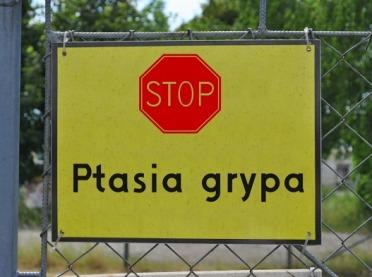 Ptasia grypa w Polsce - co należy wiedzieć?