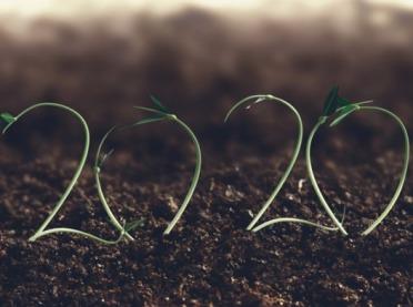 Rozpoczynamy obchody Międzynarodowego Roku Zdrowia Roślin