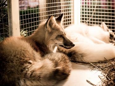 Koniec odbierania zwierząt przez organizacje proekologiczne?