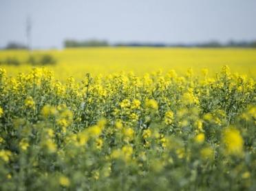 Nowe odmiany roślin oleistych i włóknistych w Krajowym Rejestrze