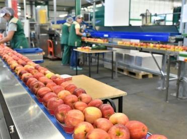 Sprzęt firmy skupującej jabłka przejęty przez KOWR?