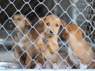 Posłowie chcą powstrzymać nielegalny handel kotami i psami