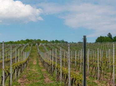 Zaproszenie na warsztaty o... uprawie winorośli