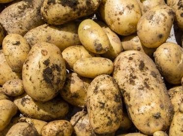 Łódzka Izba w obronie ziemniaków