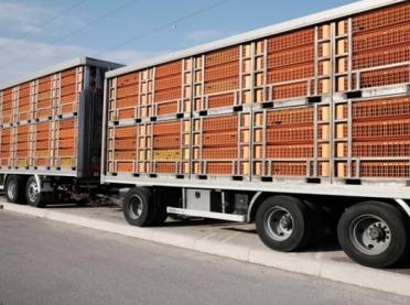 Transport zwierząt do Polski - jest specjalne przejście graniczne