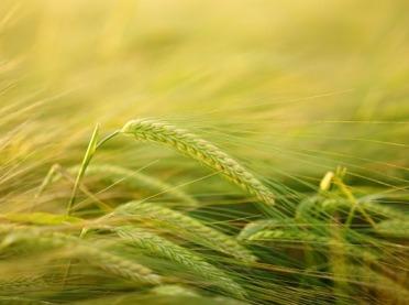 Ekologia w rolnictwie - ekologiczne zwalczanie chwastów