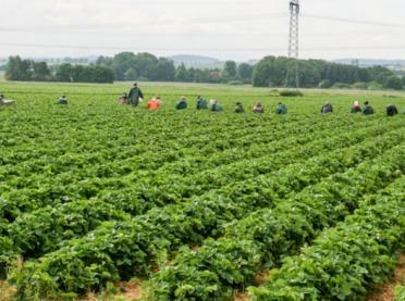 COVID-19 - co z zatrudnieniem w rolnictwie?
