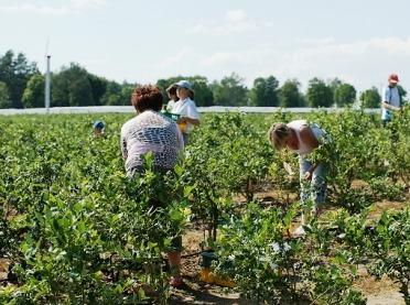 Koronawirus: co z pracownikami sezonowymi? Nowe wytyczne Komisji Europejskiej