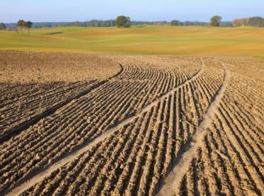 Pola po dwóch stronach granicy - wprowadzono ułatwienia dla rolników