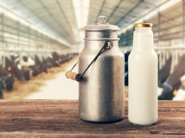 Kryzys na rynku wołowiny i mleka przez COVID-19
