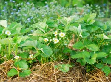 Rolnictwo ekologiczne - wsparcie finansowe, które warto wykorzystać