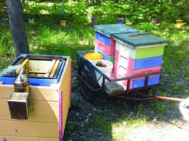 Wsparcie pszczelarstwa w latach 2020-2022