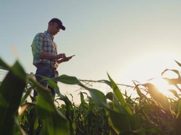 Rozszerzenie rozwiązań TARCZY ANTYKRYZYSOWEJ dla rolnictwa
