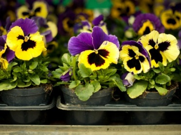 Co z pomocą dla branży roślin ozdobnych?