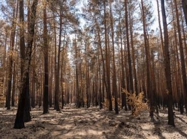 Zagrożenie pożarowe w lasach! Czy spacery są bezpieczne?
