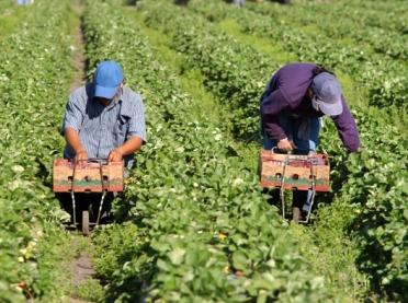Rolnicy potrzebują pomocy. Co z pracownikami sezonowymi?