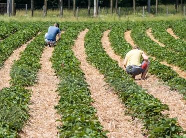 Rolnictwo potrzebuje pracowników ze Wschodu