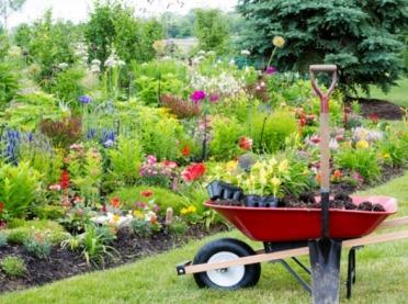 Do ogrodu po zdrowie - jaki wpływ ma na nas praca przy roślinach?