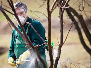 Późnojesienna ochrona drzew owocowych
