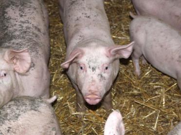 UOKiK: Zarzuty Prezesa UOKiK względem firm z branży mięsnej